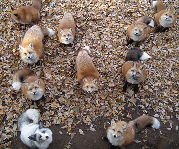 fox village1