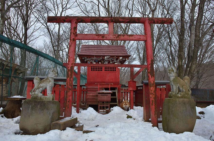 fox vllage-torii-by Piccolist